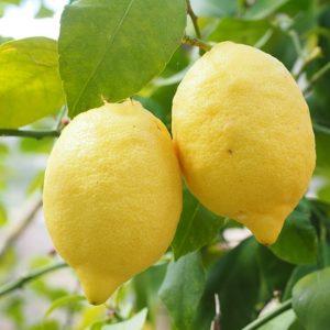 citrons de Sicile